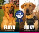 FC Truline's Just Floyd -x- ROXY-JH